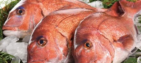 第2回玄海町真鯛祭り開催♪(お知らせ)